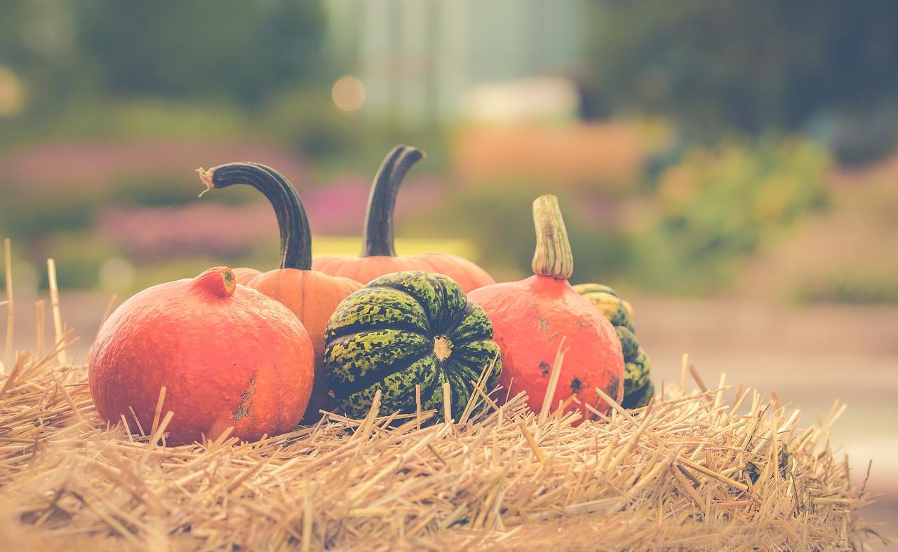 pumpkin-2989569_1280